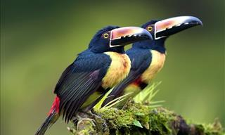 Beautiful Photos of Costa Rican Birds