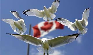 Canada's 9 Most Amazing Wild Animals