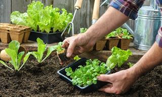 Build an Easy Emergency Vegetable Garden with These Tips