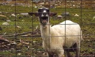 Animal Fun: Imitation is the Best Flattery!