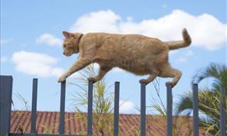 Ninja-Like Cats