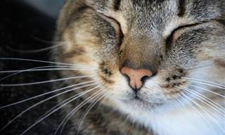 12 Things Every Cat Owner Should Be Aware and Wary Of
