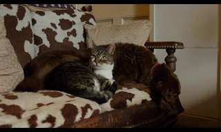 National Geographic: The Secret Life of Cats