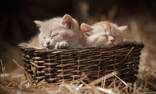 The Cutest Kittens You've Ever Seen!