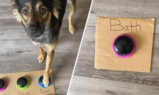 This Dog is SO Smart… And Even More Hilarious!