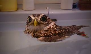 Hilarious Compilation: Are Owls Just Cats With Wings?