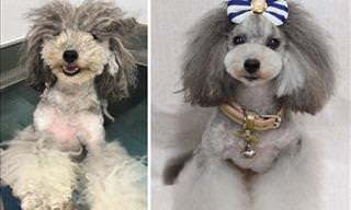 Whoa! This Dog Groomer's Talent Is Out of This World!