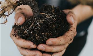 The Basics of Composting at Home