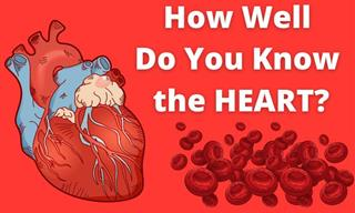 Science Quiz: How Much Do You Know About the Heart?