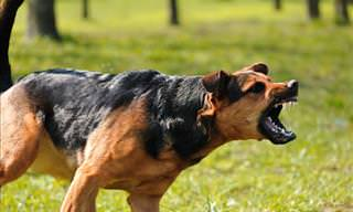 If a Dog Attacks, Remember These Tips