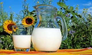 The Health Benefits and Dangers of Drinking Cow's Milk