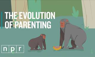 The Evolution of Parenting in a Few Minutes