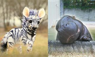 """These Adorable Wild Baby Animals Will Make You Go """"Aww!"""""""