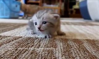 The Best Kitty Video Around