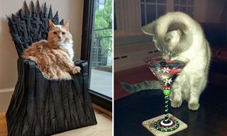 17 Spoiled Yet Funny Cats