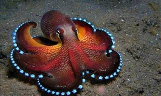 21 Ocean Species You've Never Seen Before