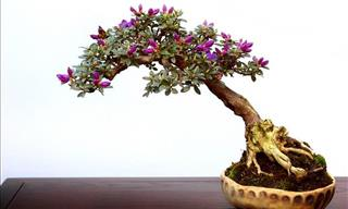 13 of the Prettiest Bonsai Trees on the Planet