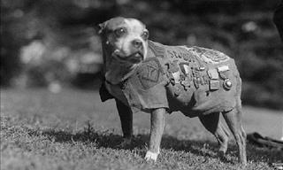 The Stories of These Great Animal War Heroes Is Inspiring
