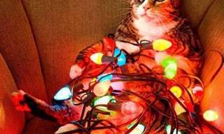 It's a Kitty Christmas After All!
