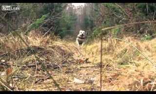 Super Dog Does Parkour - Amazing!