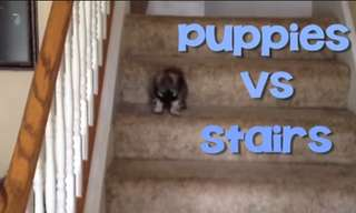 Puppies and Stairs: Great Enemies