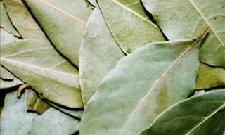 8 Vital Health Benefits of Bay Leaves