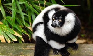 Proof That Black And White Looks Good Even on Animals!