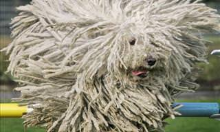 Animals With Incredible Hair Styles
