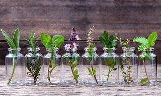 Learn How to Grow Herbs in Water