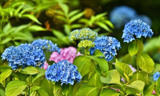 A Checklist of 10 Steps to Prepare Your Garden for Spring