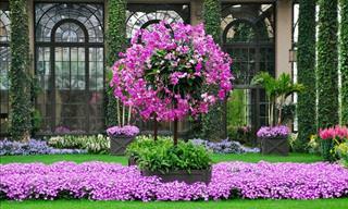 Welcome to Longwood Botanical Gardens