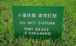 15 Outrageous Translation Fails
