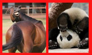 These Animals Are Cute, but They Are Far From Graceful!