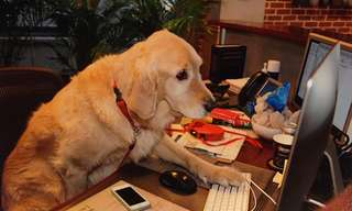 What Would it Look Like if Dogs Had Jobs?