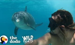 The Friendliest Dolphin You've Ever Seen...