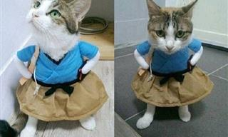 "When You Put a Cat in a Wacky Costume, Prepare For ""Awws"""