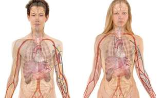 120 Amazing Facts About the Human Body