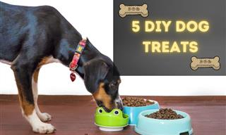 These Yummy DIY Dog Treats Are So Easy to Make!
