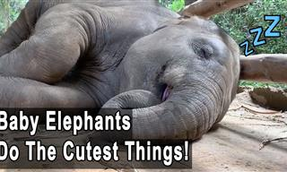 Adorable Baby Elephants That Will Make You Go 'Aww'!