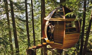 15 Dream Tree Houses