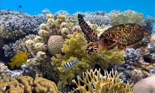 Explore the Great Barrier Reef Interactively!