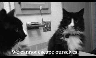Meet Henry, an Existential Cat - Hilarious!