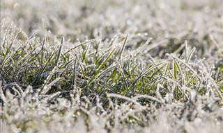 5 Lawn Care Tips to Know Before the First Frost Strikes