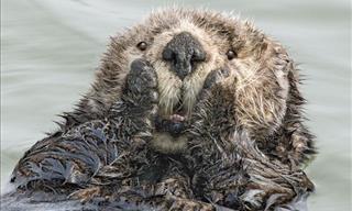 These Photos Capture Wild Animals at Their Funniest Best