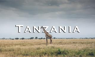 Meet Africa's Great Animals in Tarangire National Park