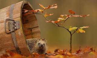 The Adorable Woodland Creatures of Holland!