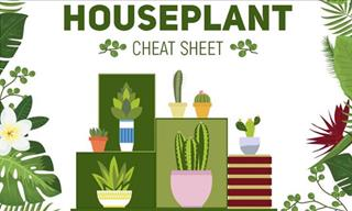 The Houseplant Cheat Sheet