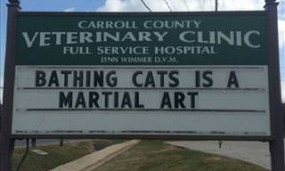 25 Signs of Vet Clinics With Cat Jokes That are Hilarious