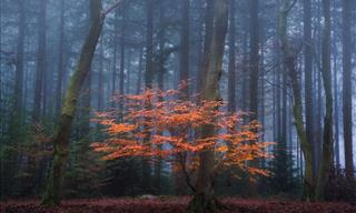 This Beautiful Forest Is Mesmerizing In Any Weather
