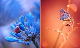 Stunning And Colorful Macro Photography